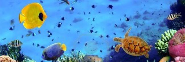 duiken 2